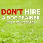 Find a Trainer for Your Irish Wolfhound
