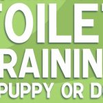 Toilet Training Your Blue Paul Terrier